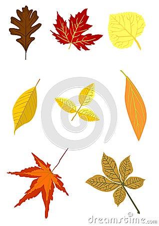 Set of autumn foliage