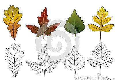 Set of autumn leaves.