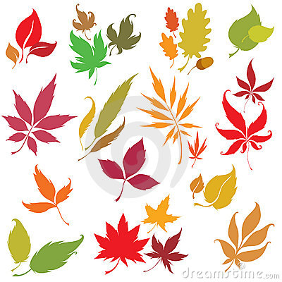 Set of  autumn leaves design elements