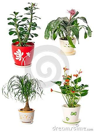 Set av inomhus växter