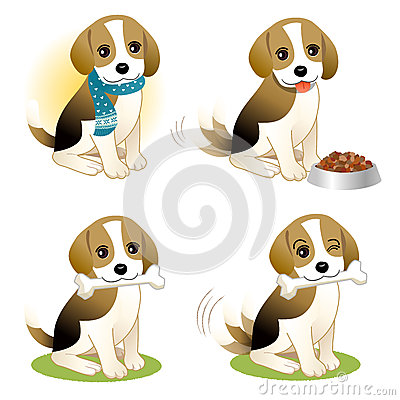 Set of Beagle puppy