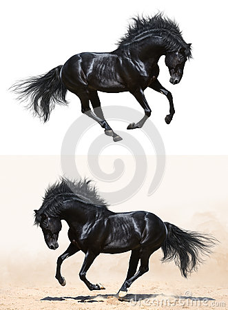 Set - black stallion in motion