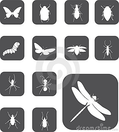 Free Set Buttons - 24_Z. Insects Stock Image - 6817131