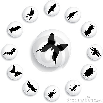 Free Set Buttons - 37_B. Insects Stock Photography - 6817442