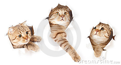 Set of cat in paper side torn hole isolated