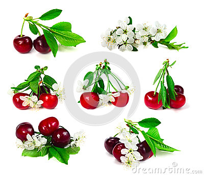 Set of cherry with leafs and flowers
