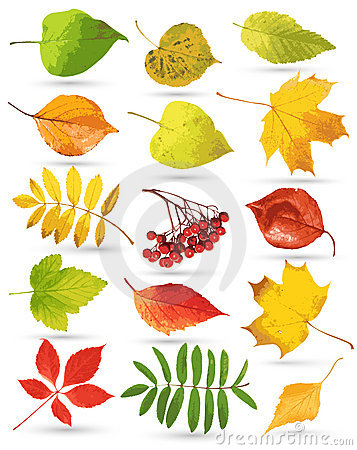 Set of colorful leaves
