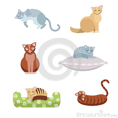 A set of cute long-haired and short-haired cats, which sit and lie on a pillow and a couch on white background. Flat cartoon style Cartoon Illustration