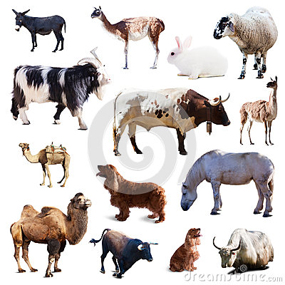 Set of farm animals. Isolated with shade Stock Photo
