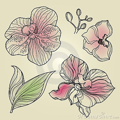 Set of floral orchid design elements