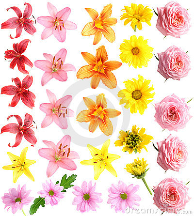 Free Set Flowers Royalty Free Stock Photos - 10430518