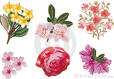 Set of flowers isolated on white