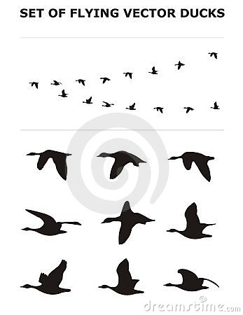 Set of flying ducks