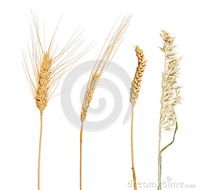 Set of four cereals isolated on white