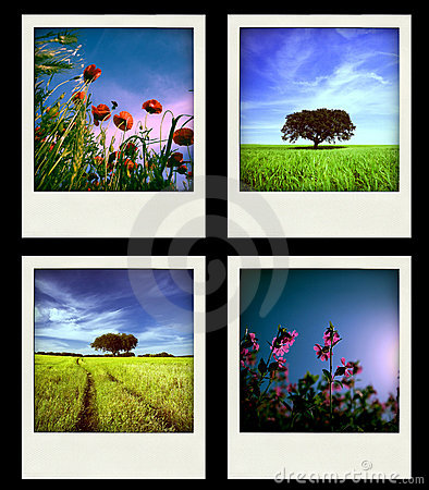 Set of four instant Nature and Spring Photos