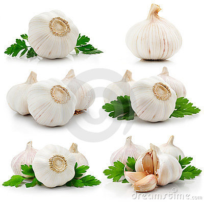 Set of garlic fruits with green parsley leaves