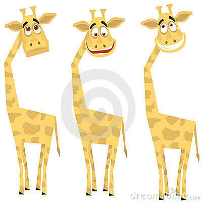 Set of giraffes