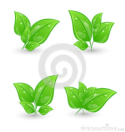 Set of green eco leaves isolated on white backgrou