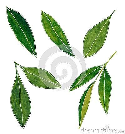 Set of green sharp citrus leaves watercolor illustration Cartoon Illustration
