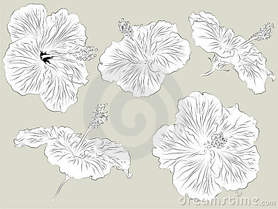 Set of hand drawn Hibiscus flowers