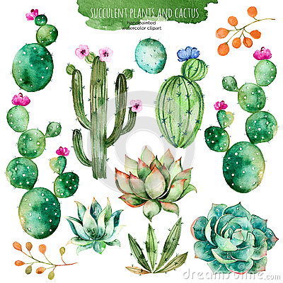 Set of high quality hand painted watercolor elements for your design with succulent plants, cactus and more. Stock Photo