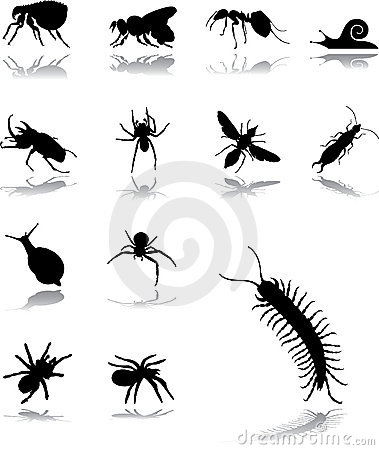 Free Set Icons - 102. Insects Stock Photography - 8669242