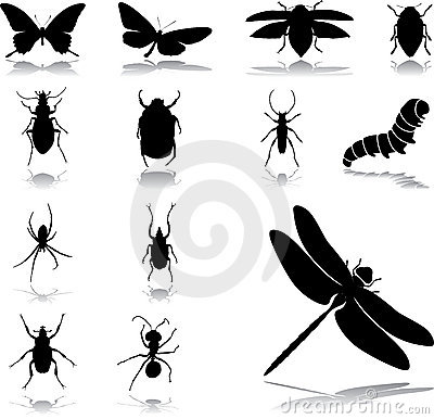 Set icons - 24. Insects