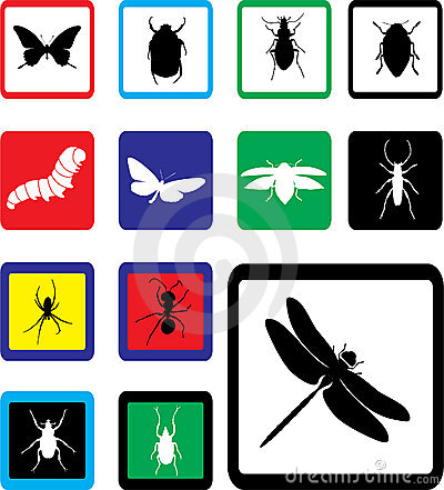 Free Set Icons - 24B. Insects Royalty Free Stock Photo - 6339815