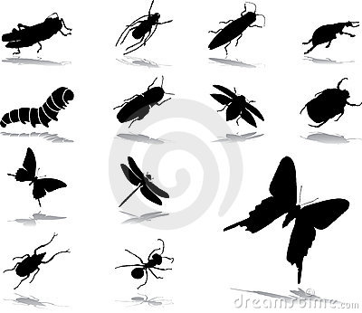 Set icons - 37. Insects