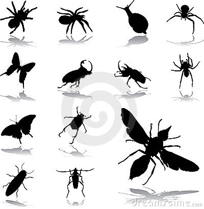Free Set Icons - 79. Insects Stock Photo - 6482950