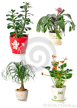 Set of indoor plants