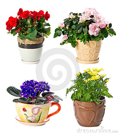 Set of indoor plants in flowerpots
