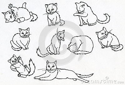 Set of ink drawn cats