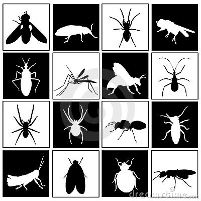 Set of insect