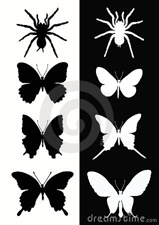 Set insect.  Butterfly and spider.
