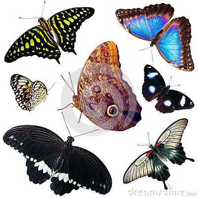 Set of isolated butterflies