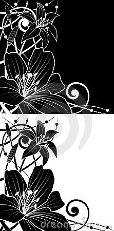 Set of lily backgrounds