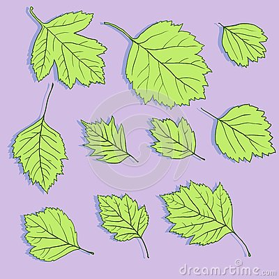 Set of linear drawing leaves