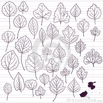 Set of linear drawing leaves at lined paper