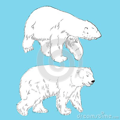 Set of linear drawing polar bears
