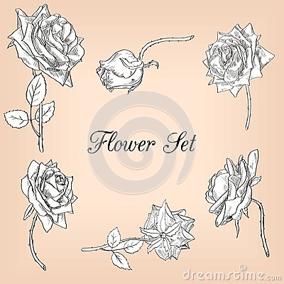 Set of linear drawing roses