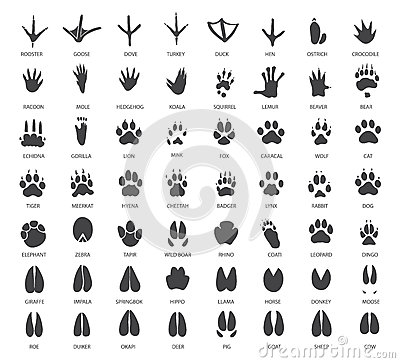 Free Set Of Animal Tracks Stock Photography - 55756252