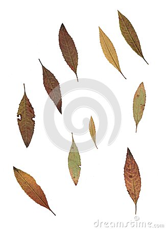 Free Set Of Autumn Leaves Isolated On White Background Royalty Free Stock Photo - 60550335
