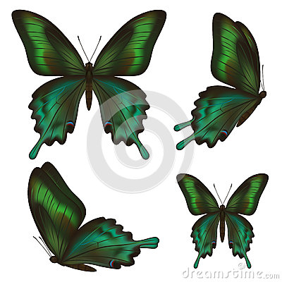 Free Set Of Beautiful Realistic Green Butterflies Over White Stock Photography - 42895762