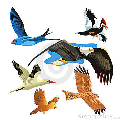 Free Set Of Birds Stock Image - 11539021