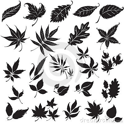 Free Set Of Black Floral Design Elements Royalty Free Stock Photography - 12455987