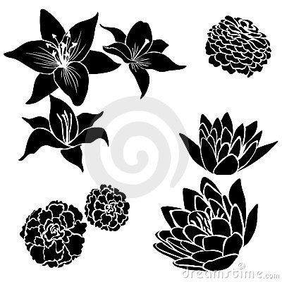 Free Set Of Black Flower Design Elements Royalty Free Stock Images - 20225499