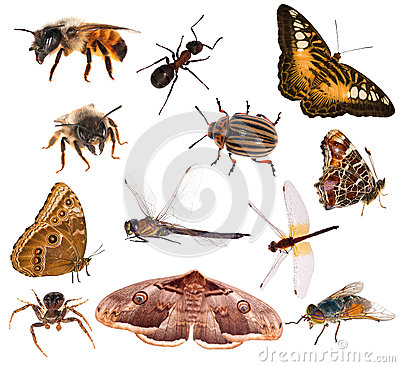 Free Set Of Brown Color Insects Isolated On White Royalty Free Stock Photography - 32225517