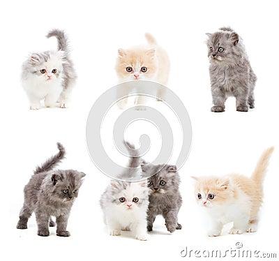Free Set Of Cats Royalty Free Stock Photos - 6614578