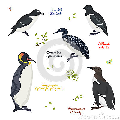 Free Set Of Different Birds, King Penguin, Common Loon And Murre, Razorbill, Little Auk Royalty Free Stock Photos - 78206428